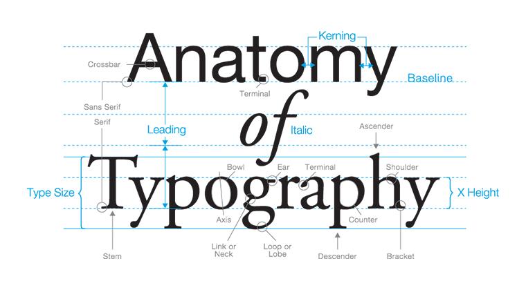 анатомия типографики сайта